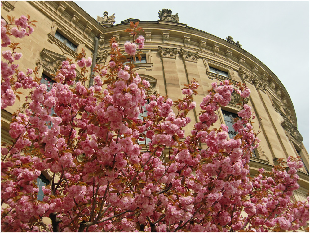 Blicke aus dem Hofgarten der Residenz (7)