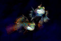 Blickkontakt Fische