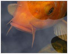 Blickkontakt mit einem Fisch