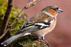 Blickkontakt mit einem Vogel .....