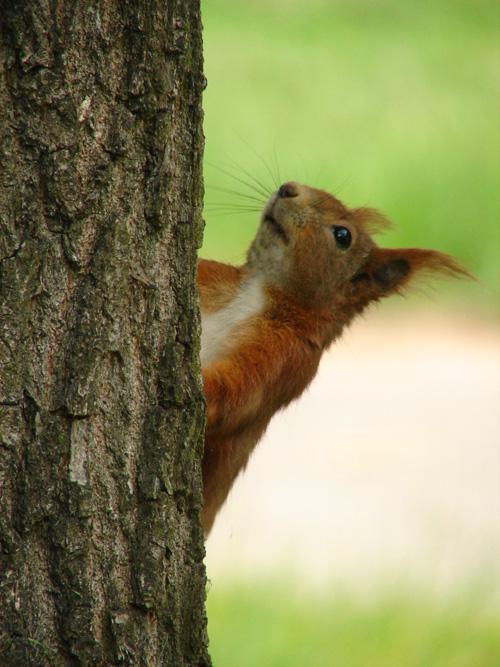 Blickkontakt mit Hörnchen
