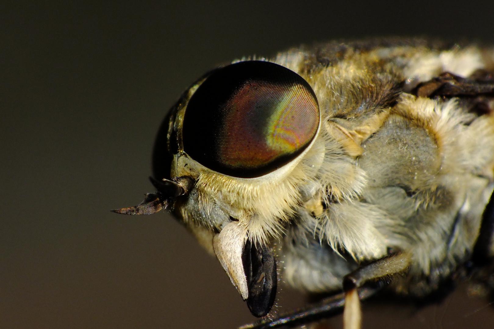 Blinde Fliege