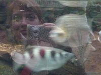 blindfisch