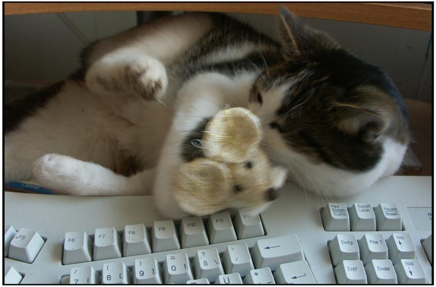 ..... blitzschnell die dumme kleine Maus