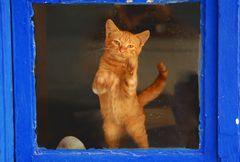 """Bloccato dalla Finestra.... """"Fatemi Uscire""""!!!!!"""