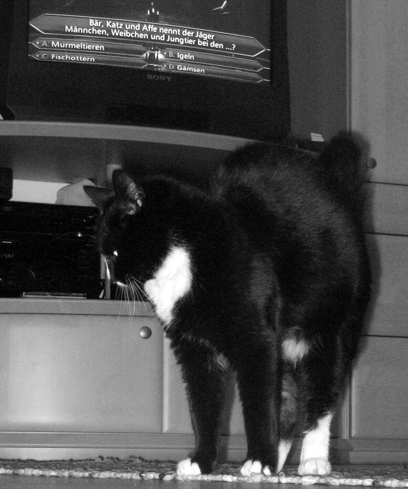Blöde Frage! - Eine Katze ist eine Katze