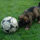 Blöder Ball... beweg dich...