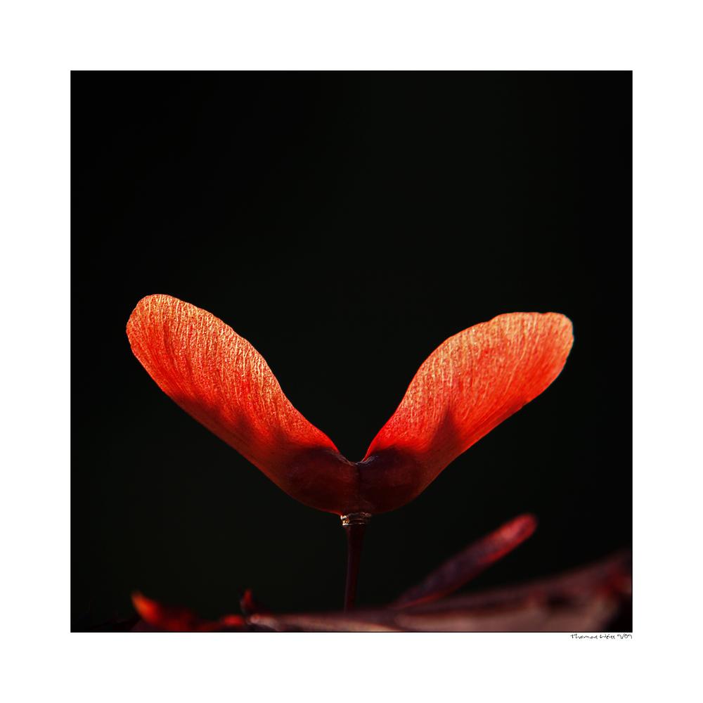 Blood-Red Autumn