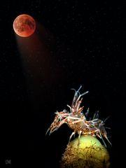 bloodmoonstruck - lunar eclipse