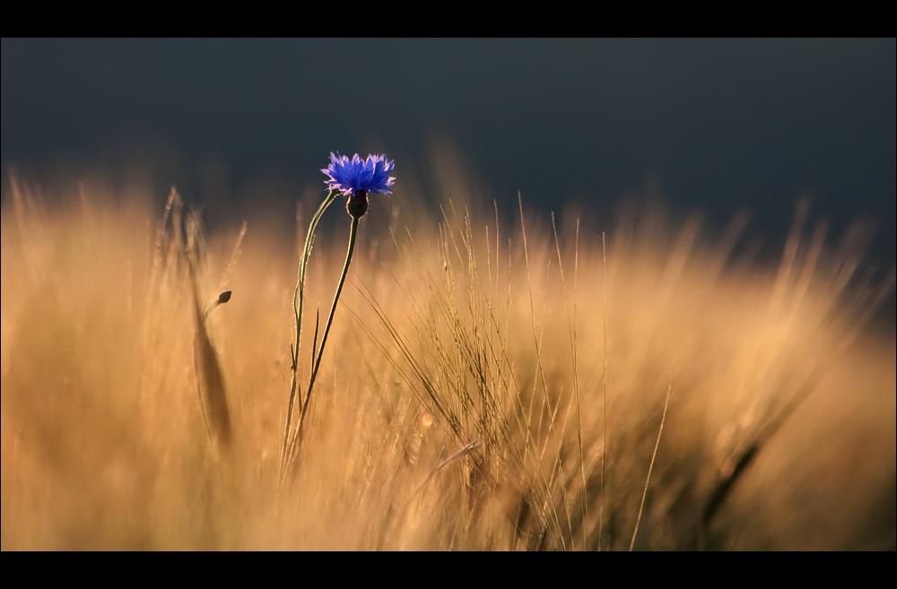 .:Bloom:.