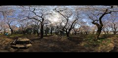 Bloomed on Panorama