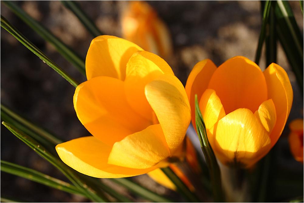 ~~ blooming ~~