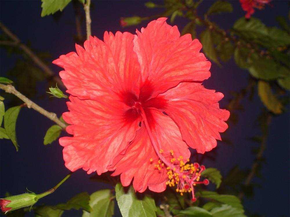 Blooming at Night