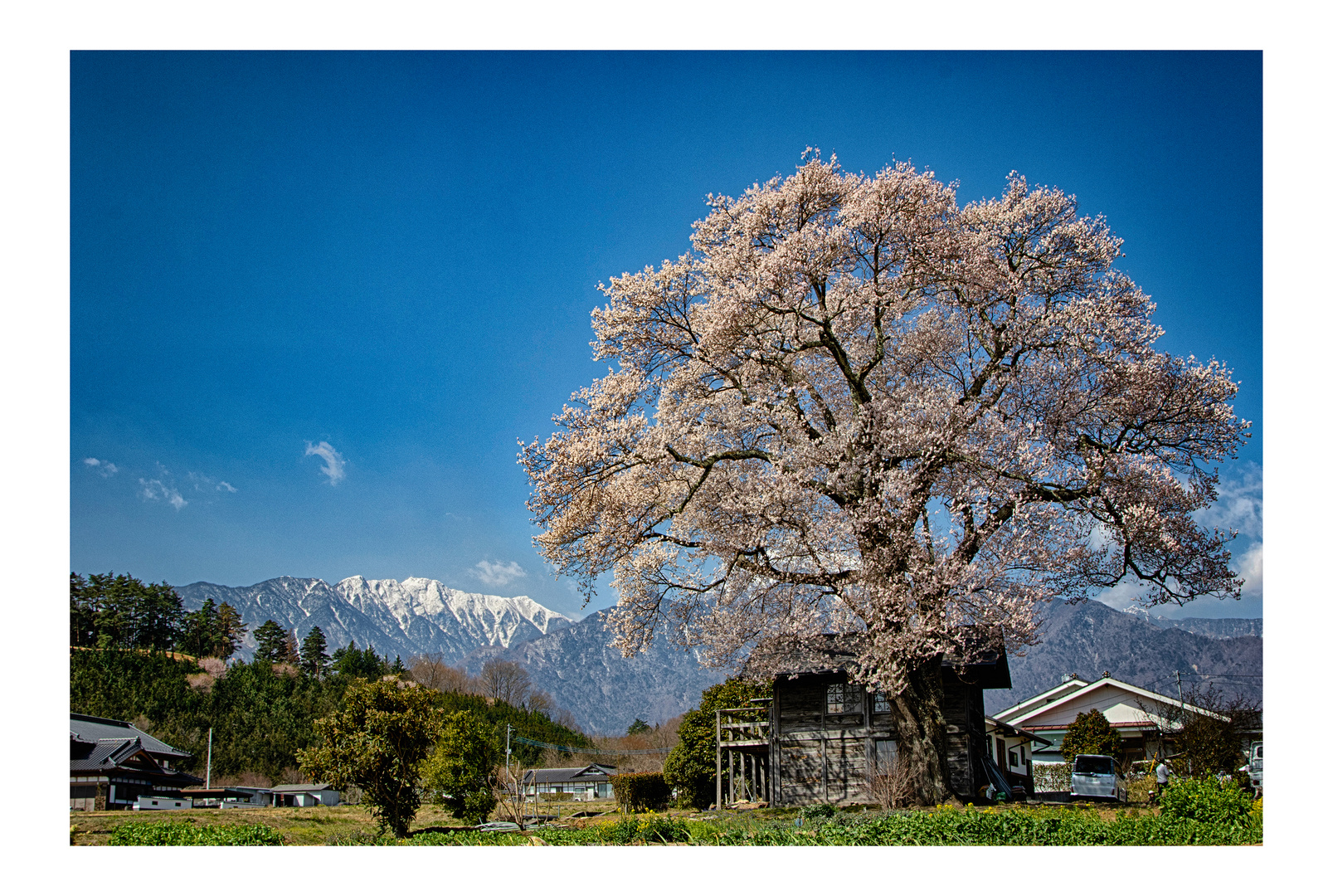 Blooming in a mountain village
