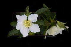 Blooms Quietly