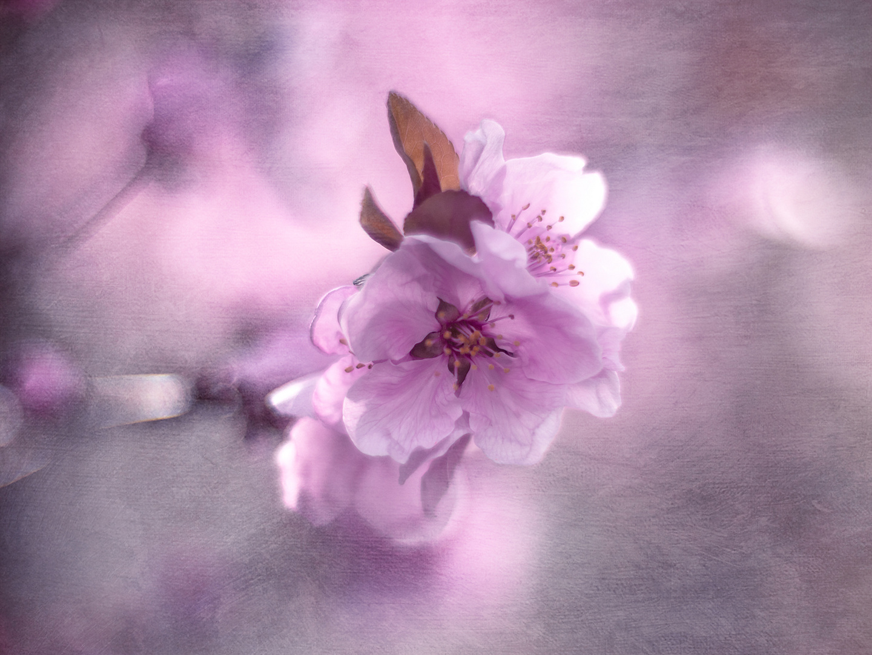 bloomy times