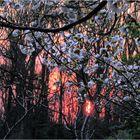 Blossoms at Sunset - A Meadowlark Springtime Impression
