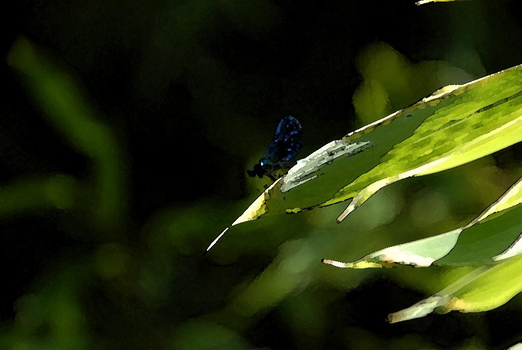 ....blu Manin....
