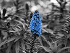 .:blue:.