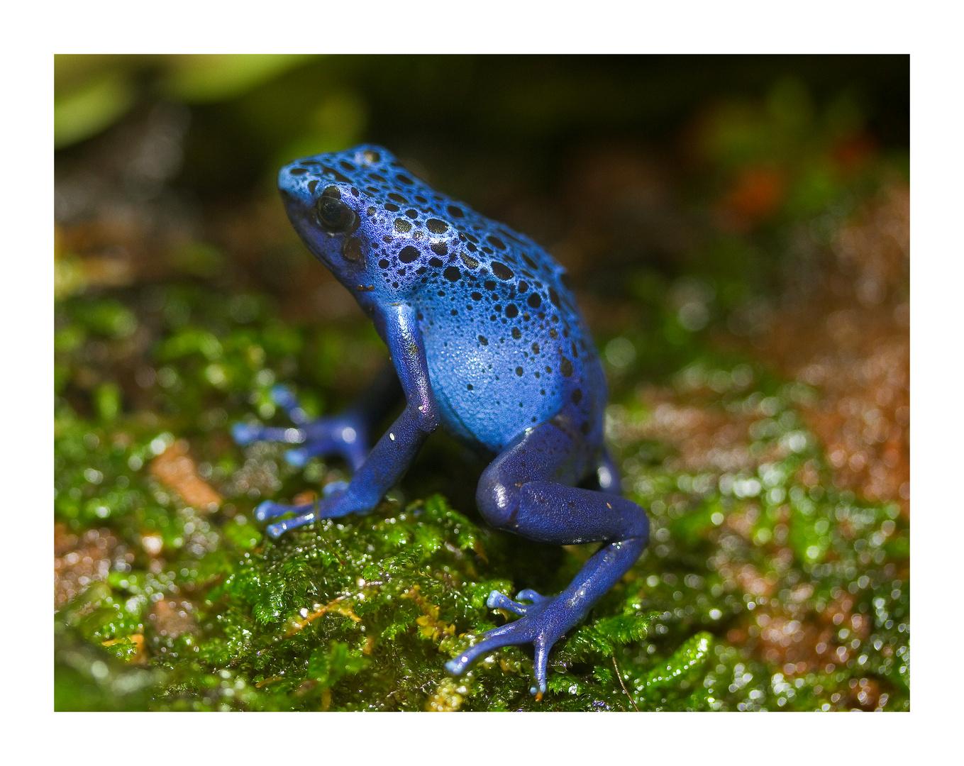 *blue*