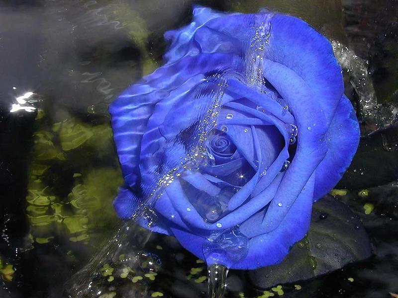 ---- blue ----