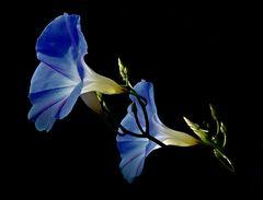 ....blue....