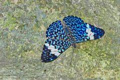 BLUE CRACKER