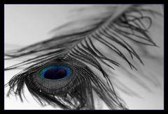 //blue eye//