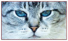 blue eyes Misti