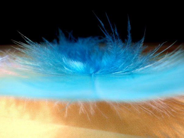 Blue feather.