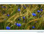~ Blue Field ~