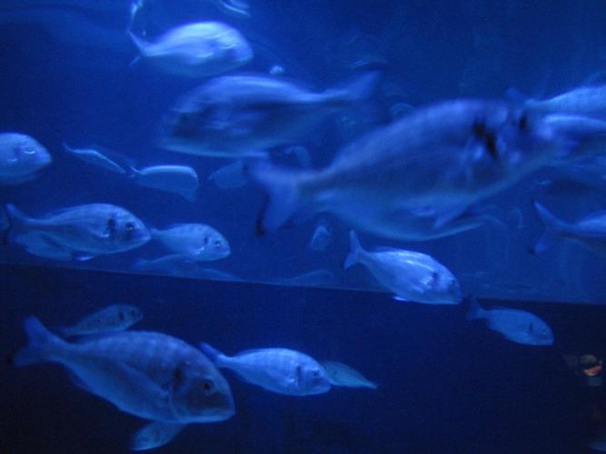 Blue fish soup