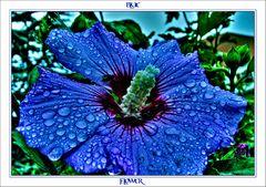 **blue flower**