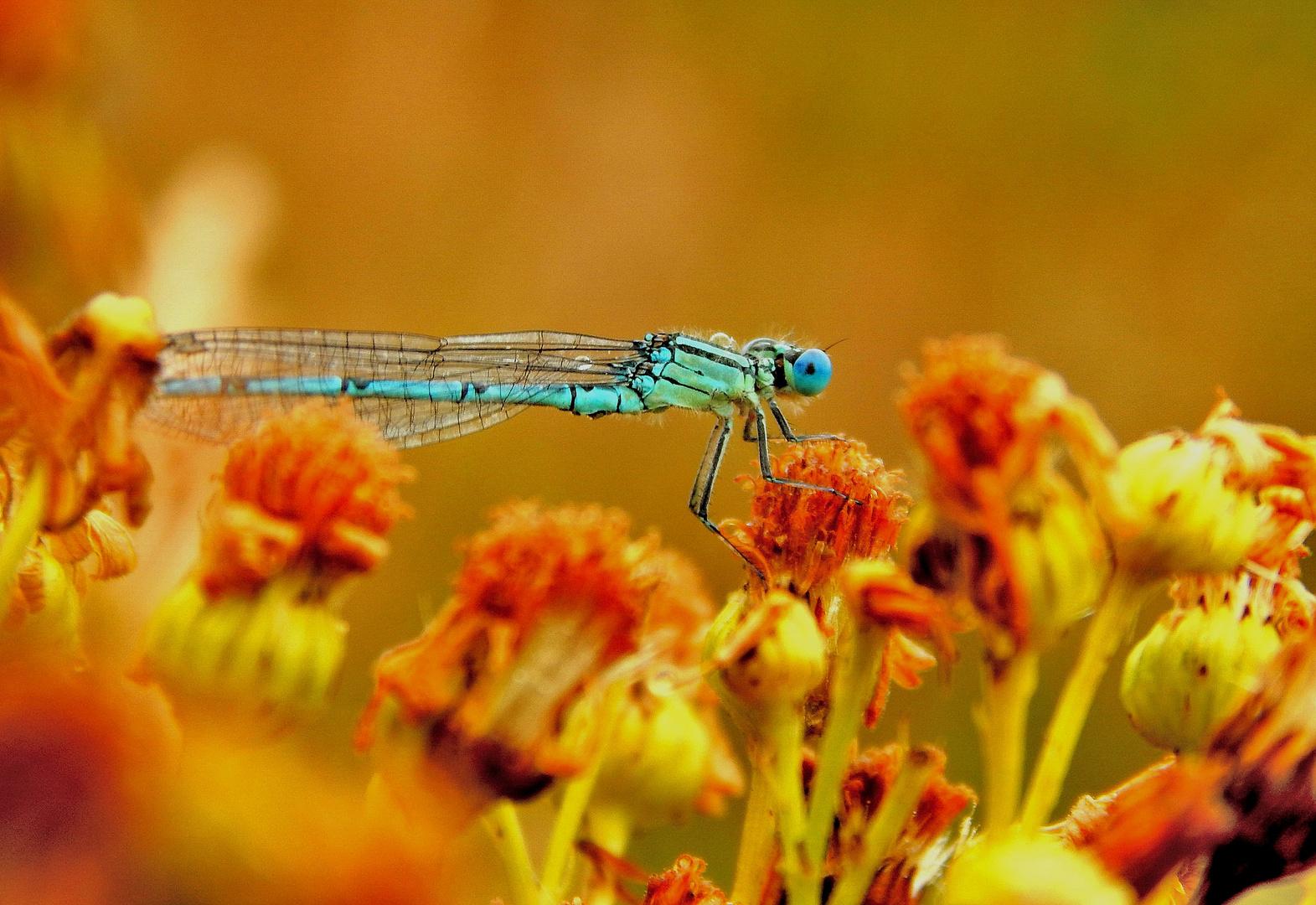 Blue light in the natur