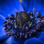blue macro