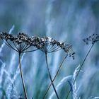 [blue meadows]