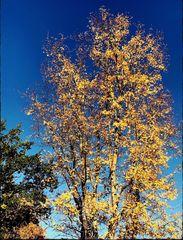 Blue Monday- Blauer Himmel und Sonnenschein