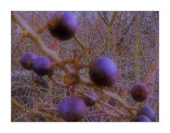 Blue Monday- Frost und blaue Beeren