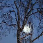 Blue Monday- Mond im Baum