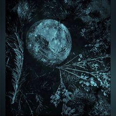 Blue Monday- Nachts im Garten