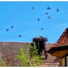 Blue Monday- Tauben am Himmel