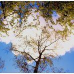 Blue Monday- Wattewolkenbaum