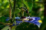 Blue Passion 2
