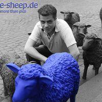 blue-sheep