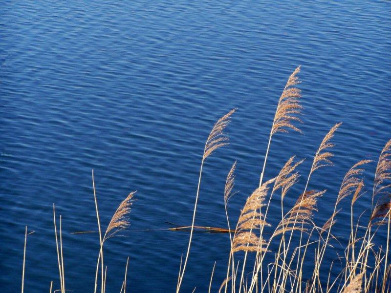 blue water...