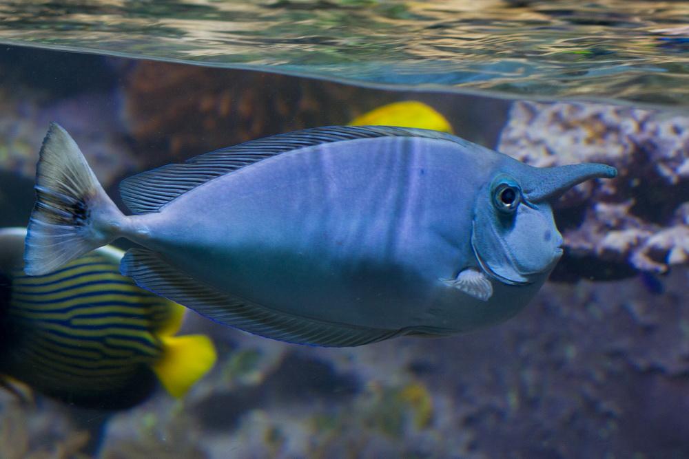 Bluefish? Microblauwahl?