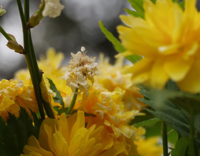 Blühen und Verblühen