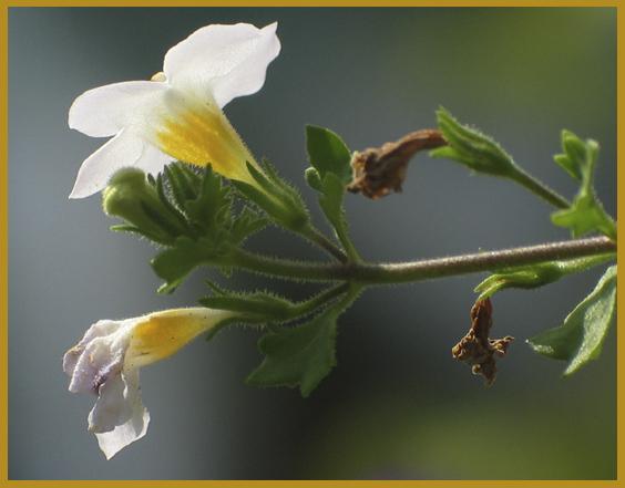 Blühen und Vergehen ...