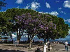Blühende Bäume auf dem Castello de Sao Jorge