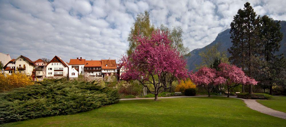 Blühende Bäume im Park von Frohnleiten!